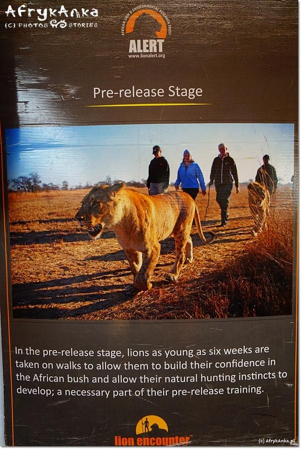 Plakat informujący o działaniach na pierwszym etapie.