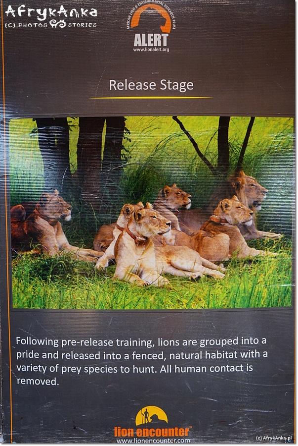 Kolejny z plakatów mówi, co dzieje się na Etapie drugim.