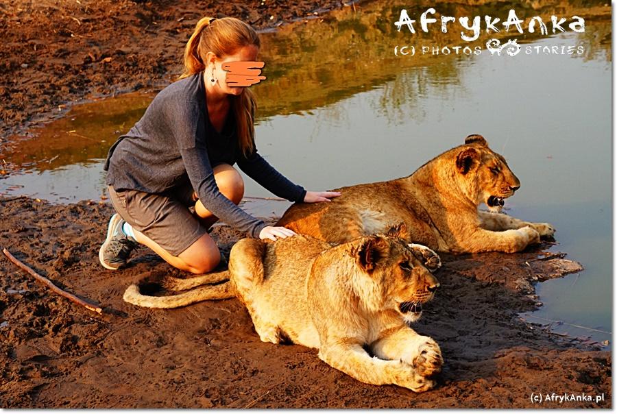 Obowiązkowe punkty spaceru z lwami: wspólne zdjęcie.