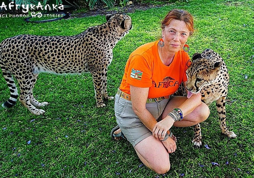 Namibia. Gepardów już nie wolno głaskać, ale nikt im nie powiedział, żeby nie lizały turystów 🙂