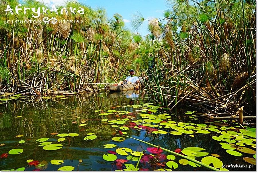Delta Okawango. Rejs mokoro przez rozlewiska.