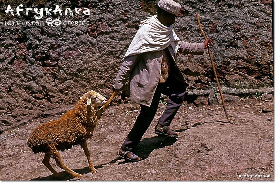 Biała kura, owce, kawa - to wszystko kupisz na każdym etiopskim targu.