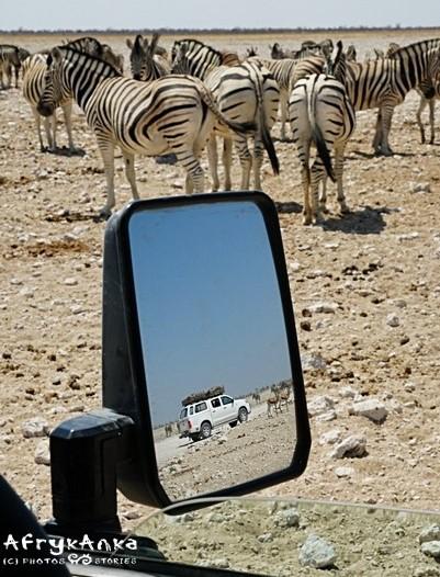 Życzę wam super udanych safari!