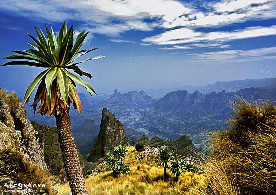 Góry Siemen są po prostu przepiękne!
