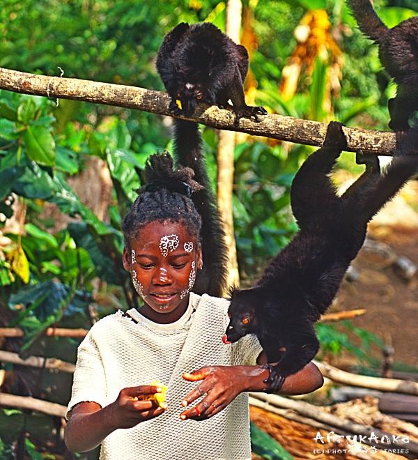 Dla przysmaku lemury wyginają śmiało ciało!