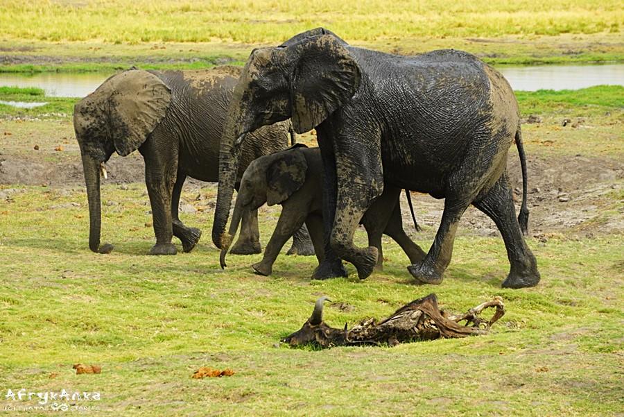 W świecie przyrody życie i śmierć się przeplatają bezustannie.