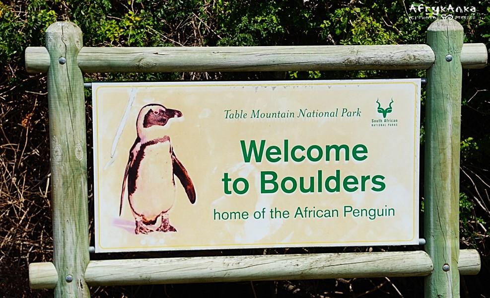 Witajcie w świecie pingwinów!