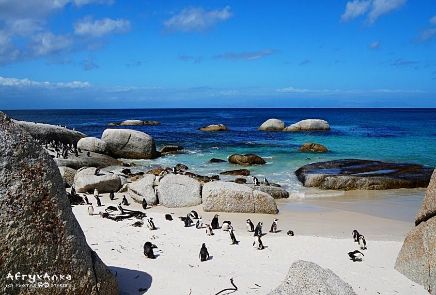 Idylliczna plaża i... pingwiny!