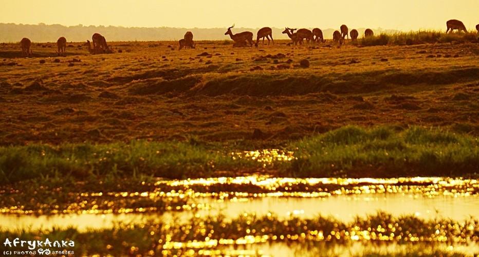 Rejs po Chobe o zachodzie słońca bywa bajkowy.