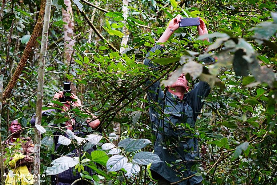 Fotografowanie w lesie Kibale to naprawdę trudne zajęcie!