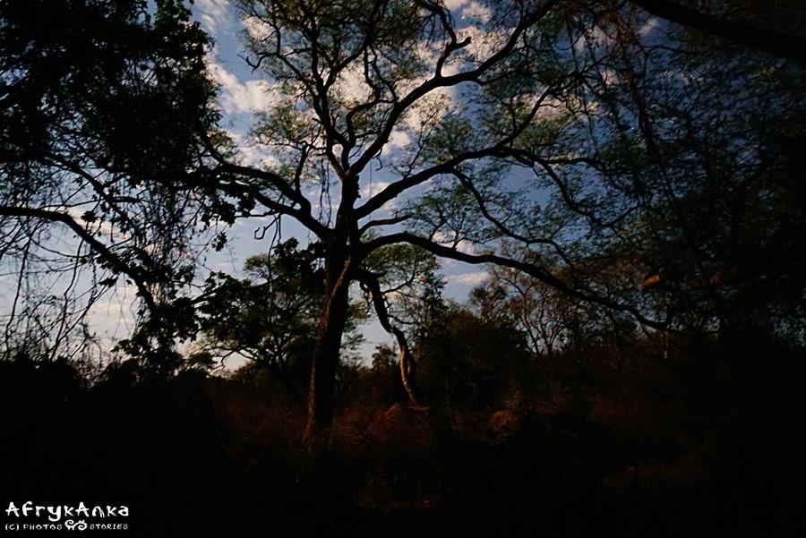 Niezwykłość przyrody nocą.