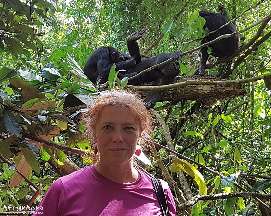 Jak dobrze, że w końcu szympansy zniżyły się do naszego poziomu!
