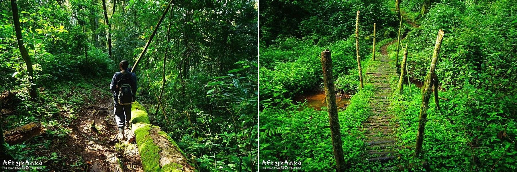 Leśne ścieżki bywają malownicze...