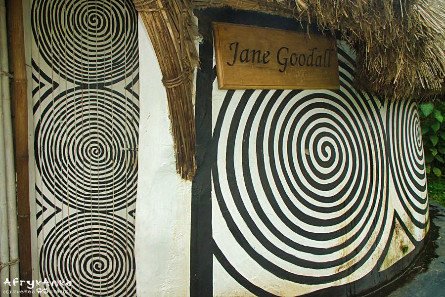 Chata ufundowana przez Jane Goodall.