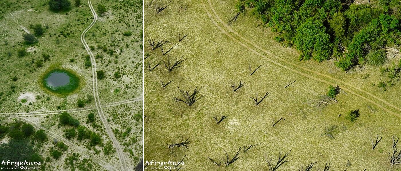 Uroda szczegółów nad Okavango.
