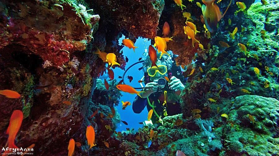 Podwodne krajobrazy są bajkowe!