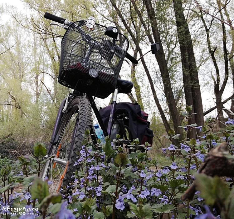 Z rowerem wśród leśnych kwiatów.