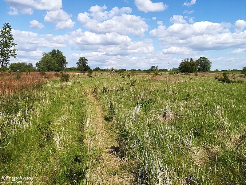 Końcówkę drogi jadę przez nadwiślańskie łąki.
