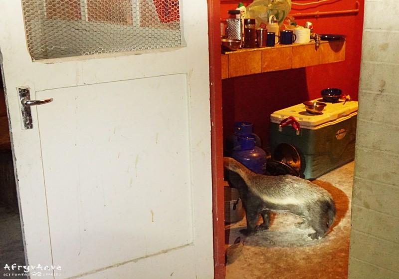 Help! Intruz w naszej kuchni!
