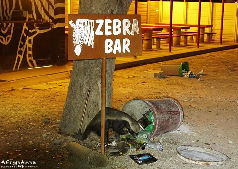 Demolka w Zebra Bar w Halali.