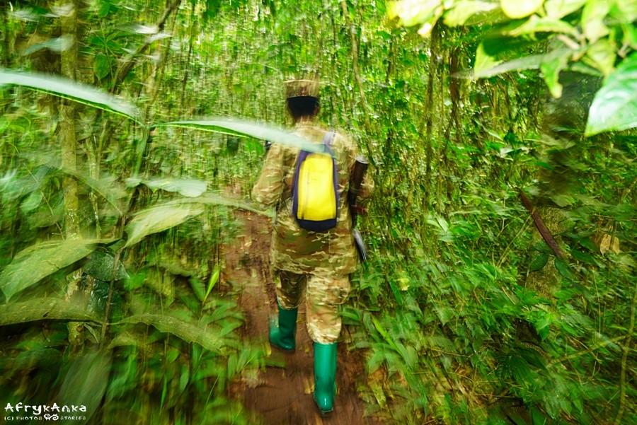 Anette wiedzie nas przez las Kibale.
