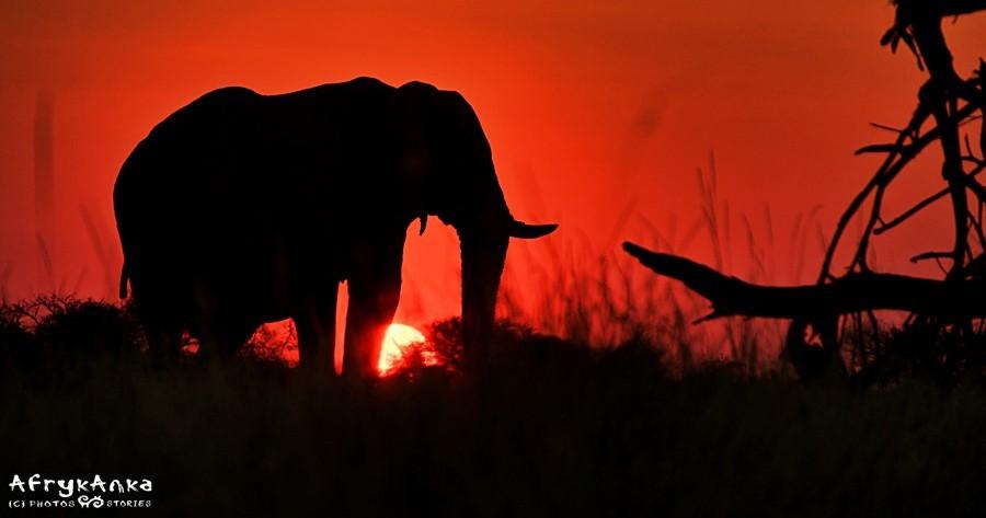 Afryka - moje szczęście...