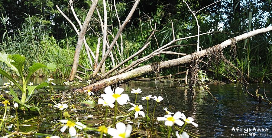 Piękne widoki na rzece.