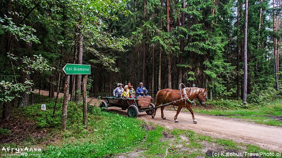 Jazda wozem przez las. Fot. K. Kobus/TravelPhoto.pl
