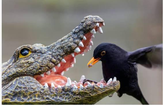 Gdy się przyjrzeć uważnie - widać że krokodyl to rzeźba.
