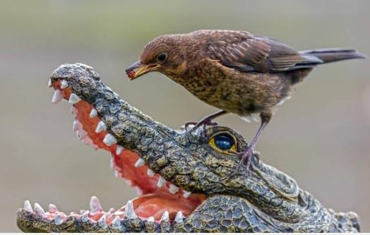 Ta sama rzeźba - inne ujęcie i inny ptak :)