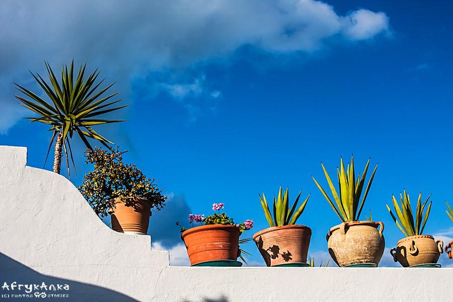 Roślinne dekoracje.