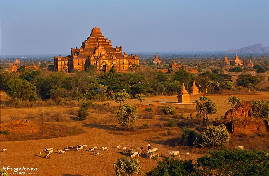 Dhammayangyi - świątynia okrutnego władcy.