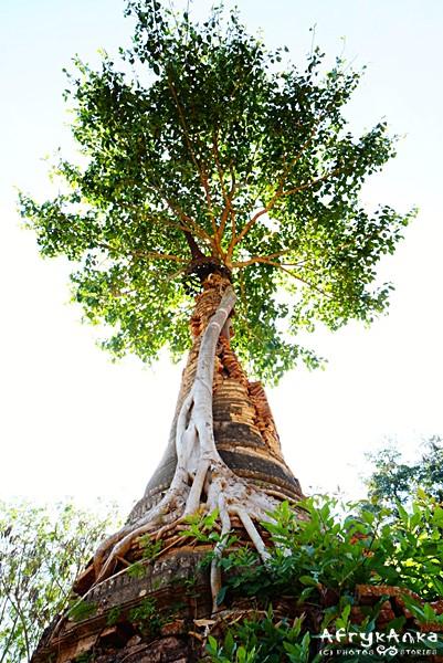 Świątynia spleciona z drzewem...
