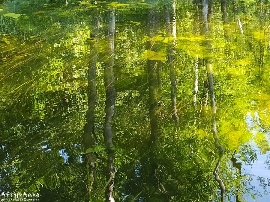 Rzeka - drzewa, drzewa - rzeka...