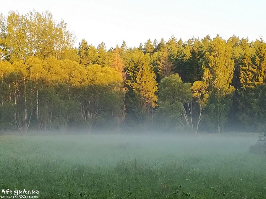 """""""Pranie się"""" mgieł nad łąką..."""