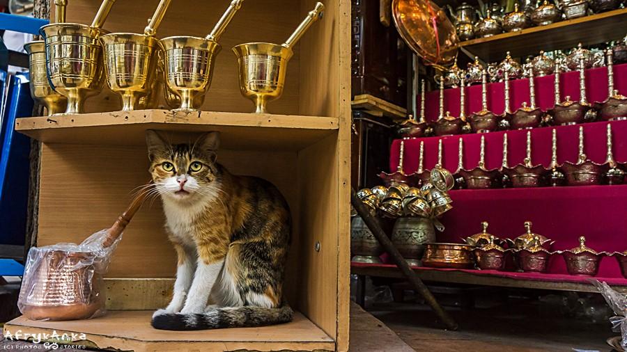 Dzbanki, dzbaneczki i kot.