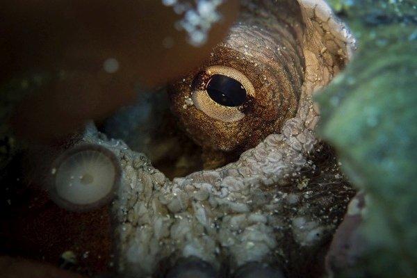 Oko w oko z damą mórz.