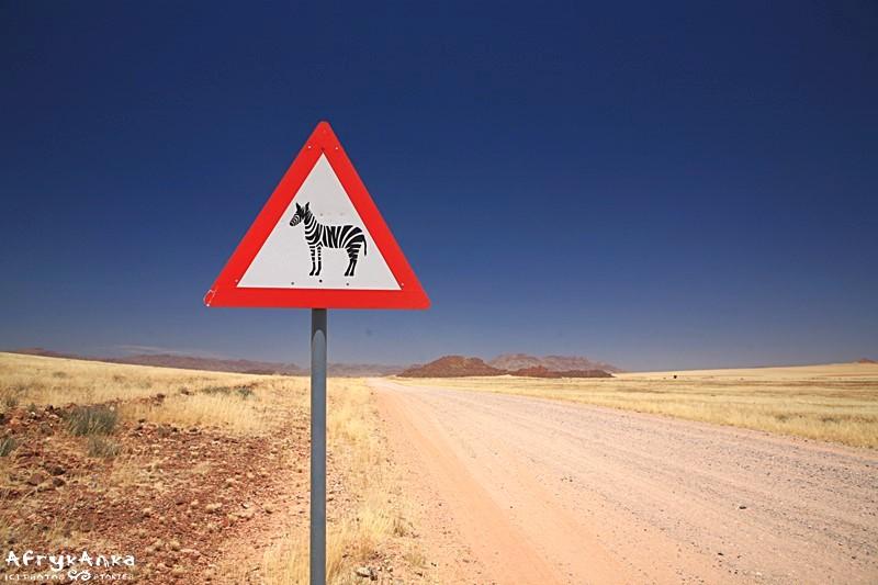 Dzień Zebry - nawet na drogach!
