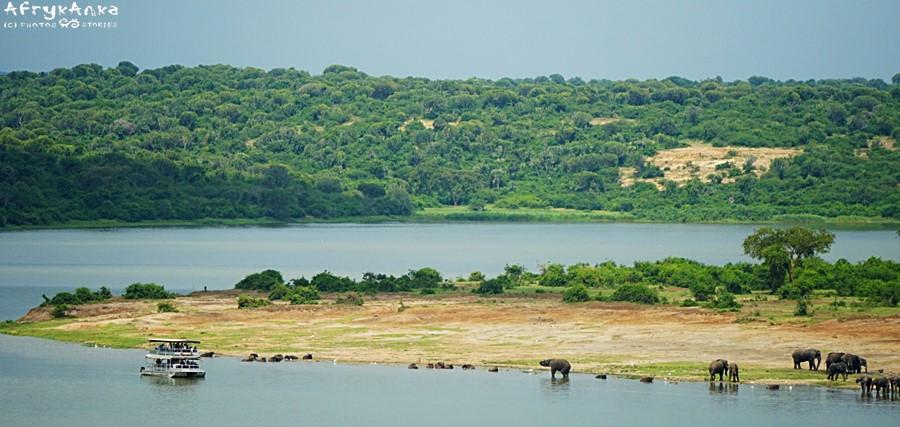 Kanał Kazinga - rejs w pobliżu zwierząt.