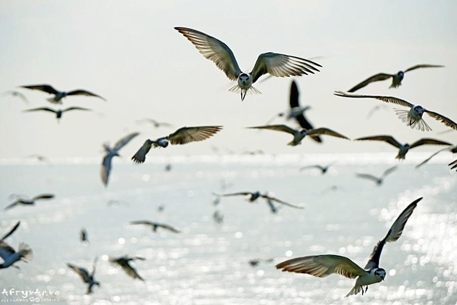 Ptaki za naszą łodzią.