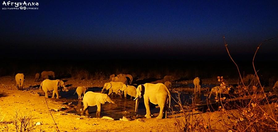 Oczko wodne w Halali i stado słoni (zdjęcie z innego wyjazdu).