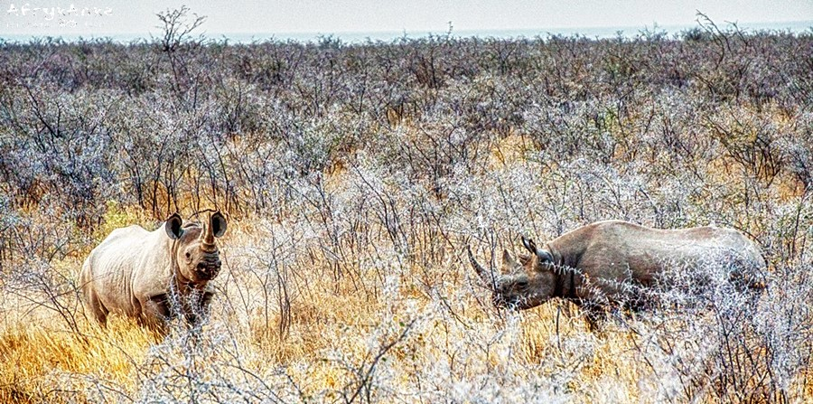 Nosorożce - tuż przy drodze!