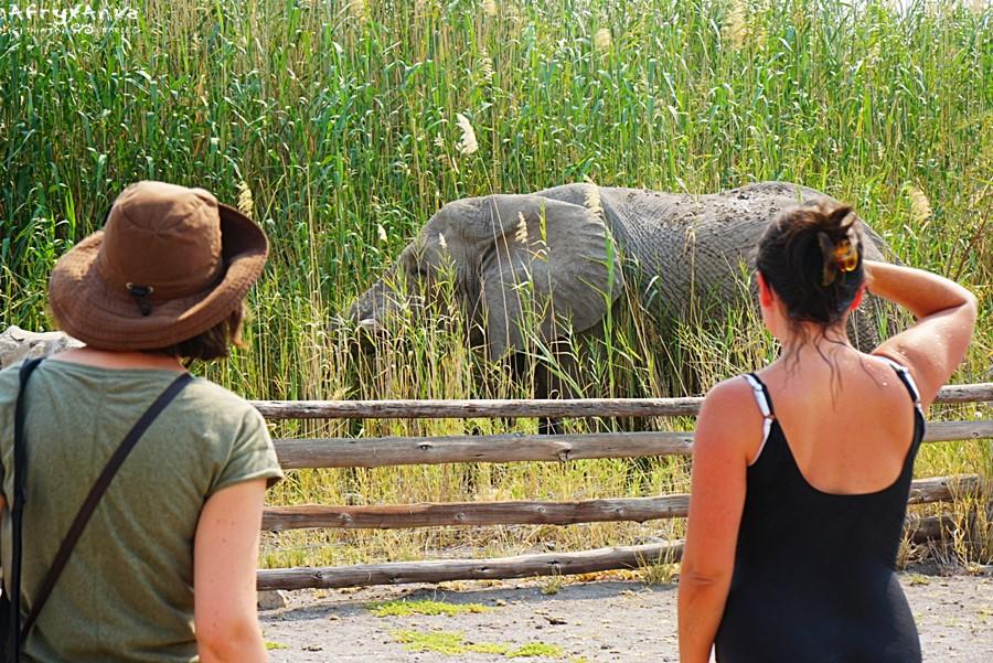 Słoń przy płocie campingu.