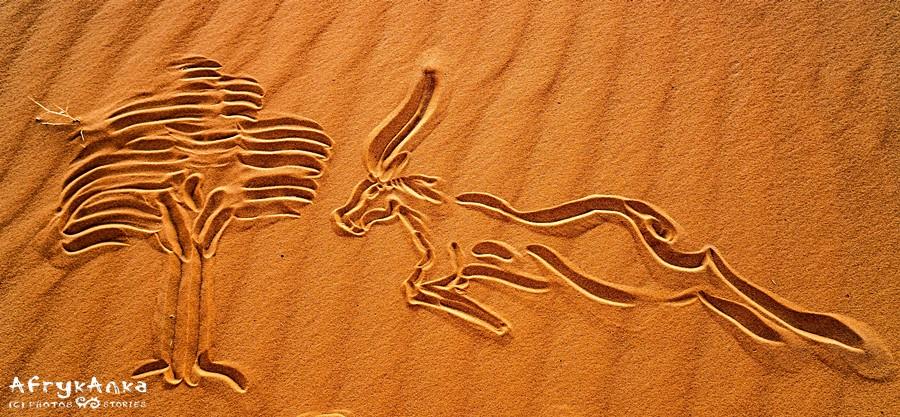 Antylopa na piasku Sahary.