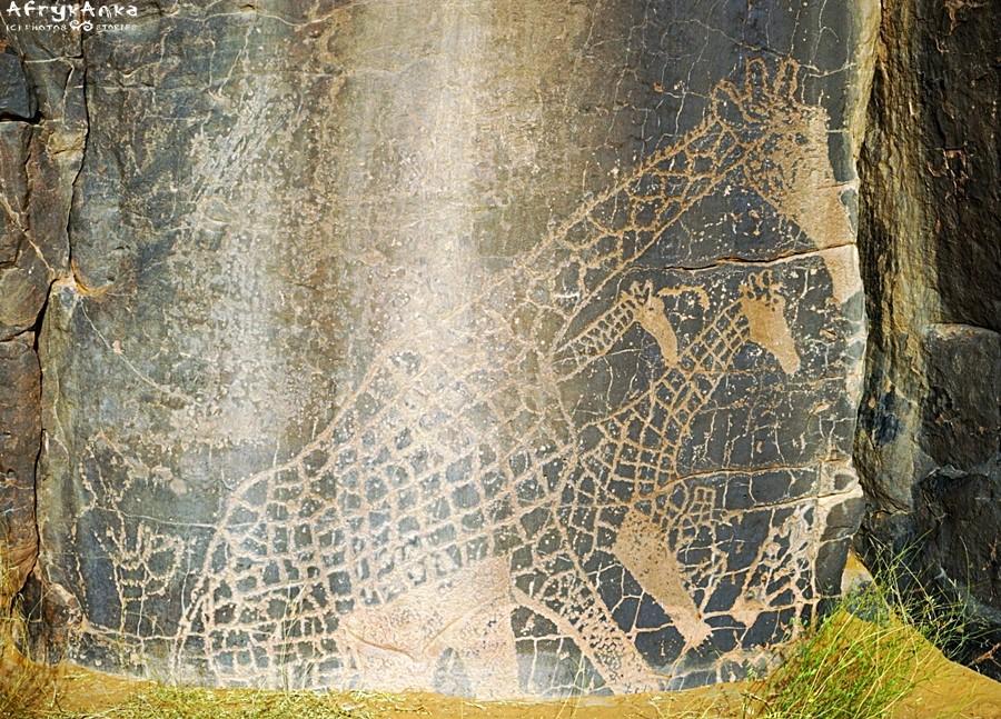Rysunki na skałach Sahary w Algierii - kiedyś żyły tu żyrafy.