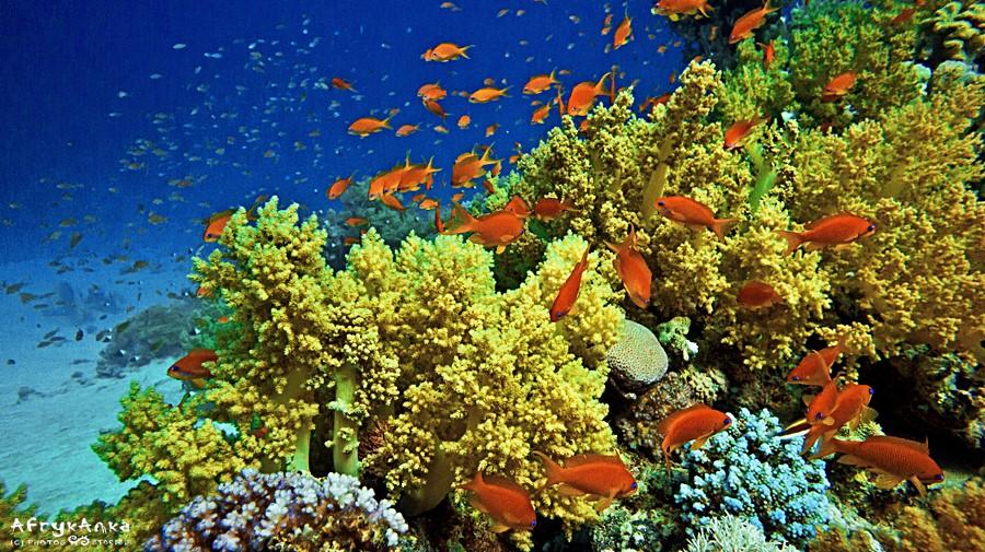 Podwodne parki narodowe też są zagrożone.