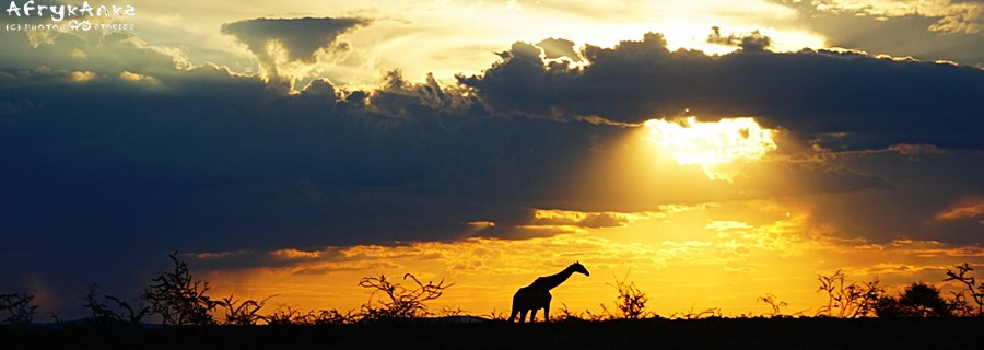 Samotnik o zachodzie słońca.