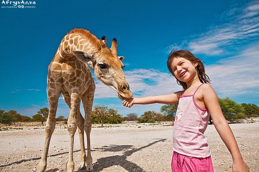 Roczna żyrafa - żyjąc na farmie piła... mleko z butelki!