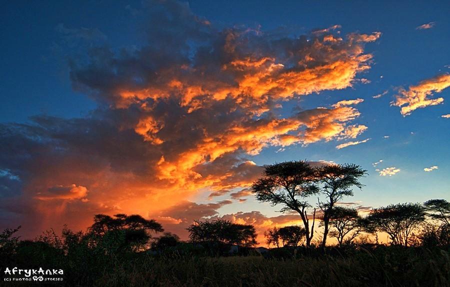 Świat dzikiej przyrody zachwyca każdego dnia.