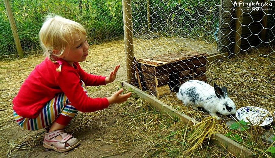 Karmienie królików daje radość.